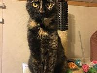 June's story June is a 3yr old female DSH. She is a