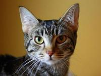 June's story This cat is ready for a forever home! They