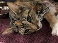 June's story Hi there! I am June, a spayed female