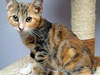 June's story June is a female torbie kitten, born on