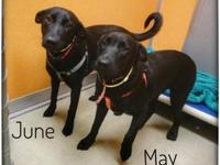 June's story Meet June, here at PCHS with her sister,