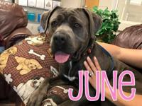 June is an AMAZING big girl rescued from Santa Rosa. So