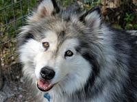 My story Juneau and Aspen have been evaluated by