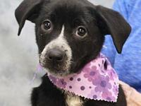 Juneau-PENDING's story To be considered for adopting a