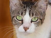 JuneBug's story Meet June Bug! She is a sweet domestic
