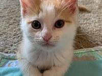 My story Junebug is a female Domestic Medium Hair