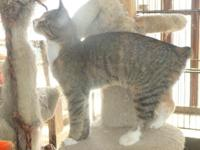 PJ's Exotic Cattery in Hercules, California is in the