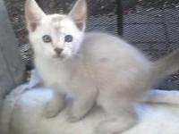 I have F-3 and F-4 Jungle Kittens Available - 2 snow