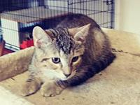 Junie's story This sweet girl is named Junie!. She is a