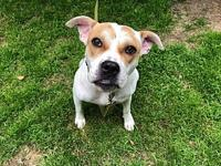 Junie's story Junie is a 2 year old female who came to