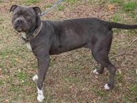 3/22~ Please share Junior! He is now available for