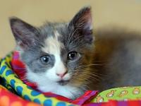 Juniper's story Description: Dilute calico Personality: