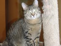 Juno is a small brown female tabby. She and her sister,