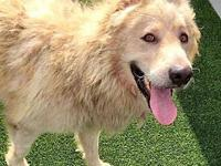 Juno's story Juno is 4-years-old. He is a sweet dog and