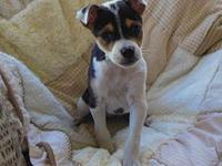 Juno's story Tiny Juno.. . Juno was rescued from a