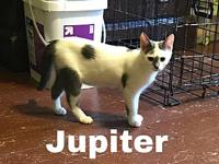 Jupiter's story Jupiter is such a soft little girl not