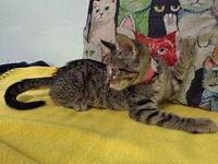 Jupiter's story -- -- Kitten Division Adoption Center,