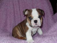 This wonderful little boy is my pick of the litter on