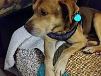 Justice's story Meet Justice, he's a Terrier mix, about