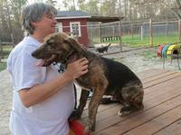 JUSTIN is a 6-month-old Plott hound mix who is sweet