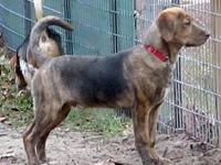 Justin's story JUSTIN is a 6-month-old Plott hound mix