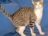 My story I'm outgoing and playful. I'm a grey tabby