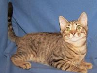 My story I'm outgoing and playful. I'm a brown tabby
