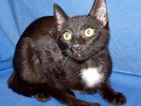 "My story I'm playful and outgoing. I""m a black neutered"