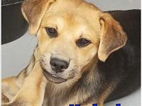 Kabaka's story Male - 11 weeks, beagle/collie mix. Dog,