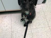 Hello there - my name is Kacey!  I am a very sweet girl