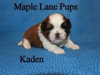 Kaden is a fantastic Red & & White with Black Tipping.