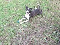 Kadence's story Kadence is a sweet 1.5 year old female