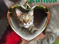 KAHLUA's story Visit this organization's web site to
