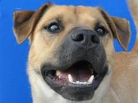 I'm a young black mouth cur/shar-pei mix fellow who
