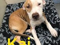 My story Kai is a 6-8 month old pit bull. He is loose