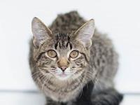 Kaitlyn's story Kaitlyn is a spayed female kitten,