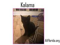 Kalama's story You can fill out an adoption application