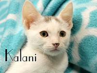 Kalani's story The adoption fee is $85.00 with an