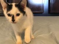 My story Kale is a white and black male kitten. He and
