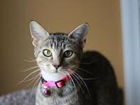 Kaleigh - MEET ME @ PETCO's story This cat is ready for