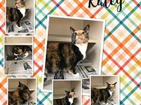 Kaley's story Kaley is a 9 year old spayed female