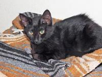 KALI KAT's story Kali also known as Midnight loves