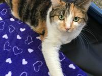 Kalie is one of six cats who recently joined us after