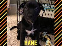 Kane's story Kane is 9 weeks old and will be ready for