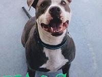My story Hi! Im a 7 year old male Pit/Terrier mix. I