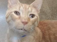 Karl's story Karl is a seven-year-old orange tabby we