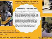 Karma's story Karma is an older girl that had a run of