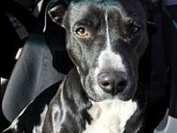 Karma's story Meet Karma , she is 2.5 yrs old and is a