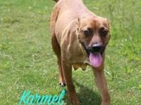Karmel's story Karmel has been a fantastic momma dog to
