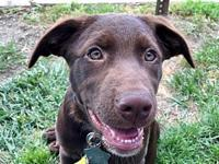 Kasell's story Meet Kasell! He is one of a litter of